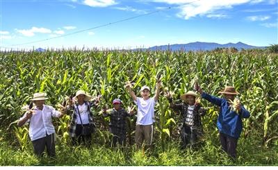 """率先开发""""大棚蔬菜,蚕桑养殖,茶叶,鸡和生猪""""五大特色险种,相继开展图片"""